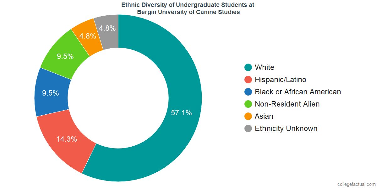 Ethnic Diversity of Undergraduates at Bergin University of Canine Studies